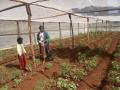 Rabbeca_Kinga_SH._Planted_tomatoes.