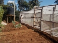 Were_Odipo_SH._Planted_kales,_tomatoes_&_tomatoes.