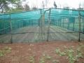Bird-netting-II