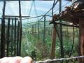 Kenya-jan-2012-025[1]
